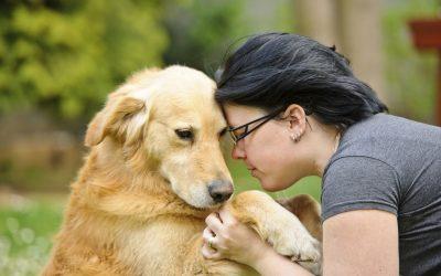 Veja 10 cuidados básicos com os animais de estimação