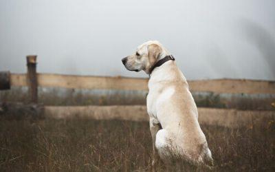 Como agir com os cães abandonados