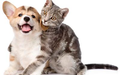 As 3 principais curiosidades sobre Cães e Gatos