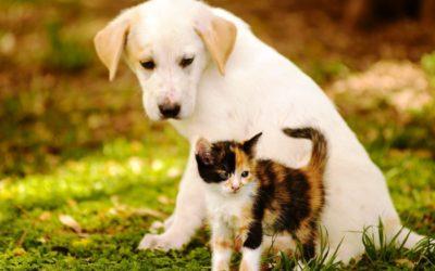 VOCÊ SABIA? Cães e Gatos enxergam cores