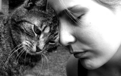Gatos se afeiçoam aos donos da mesma maneira que crianças com os pais, aponta estudo