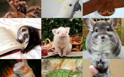 09 Pets diferentes : Animais exóticos para se ter de estimação!