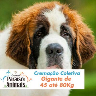 cremacao-coletiva-gigante-de-45-ate-80kg