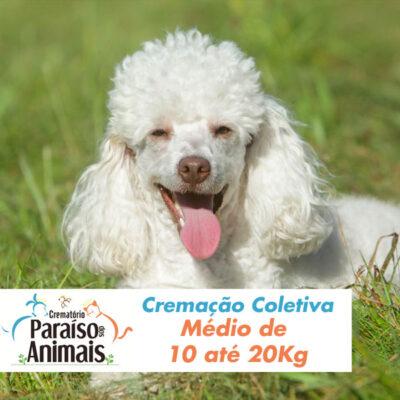 cremacao-coletiva-medio-de-10-ate-20kg