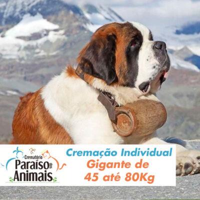 cremacao-individual-gigante-de-45-ate-80kg