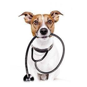 Vida Animal Pet Shop e Veterinária