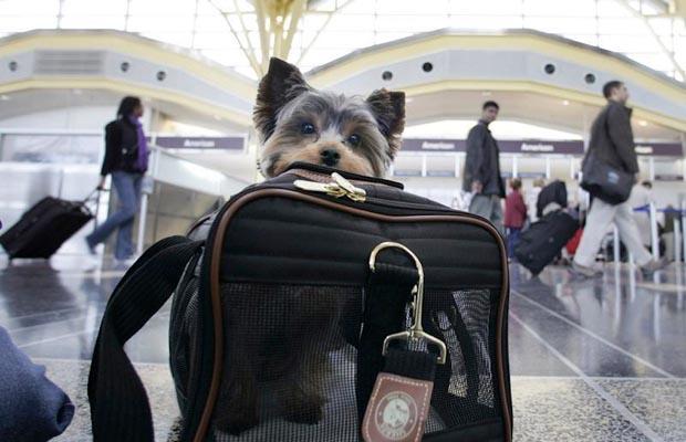 Tudo sobre viagens com animais de estimação
