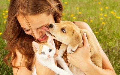 Dez diferenças interessantes entre Cães e Gatos