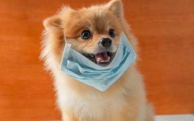 Cães e gatos não transmitem COVID-19, Saiba mais: