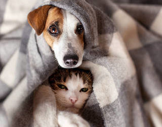 Dicas de como cuidar bem do seu pet no inverno